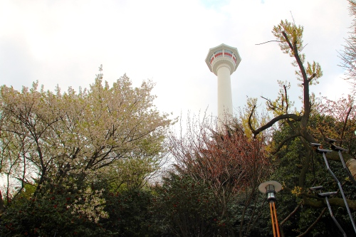 Busan Tower above Cherry Blossoms