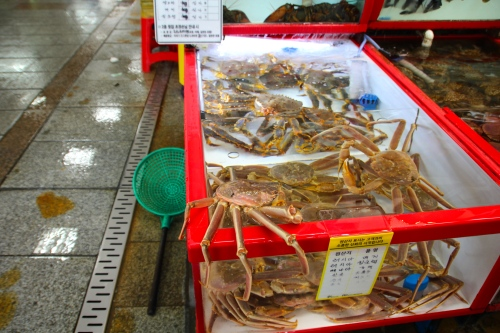 Crabs at Jagalchi Market