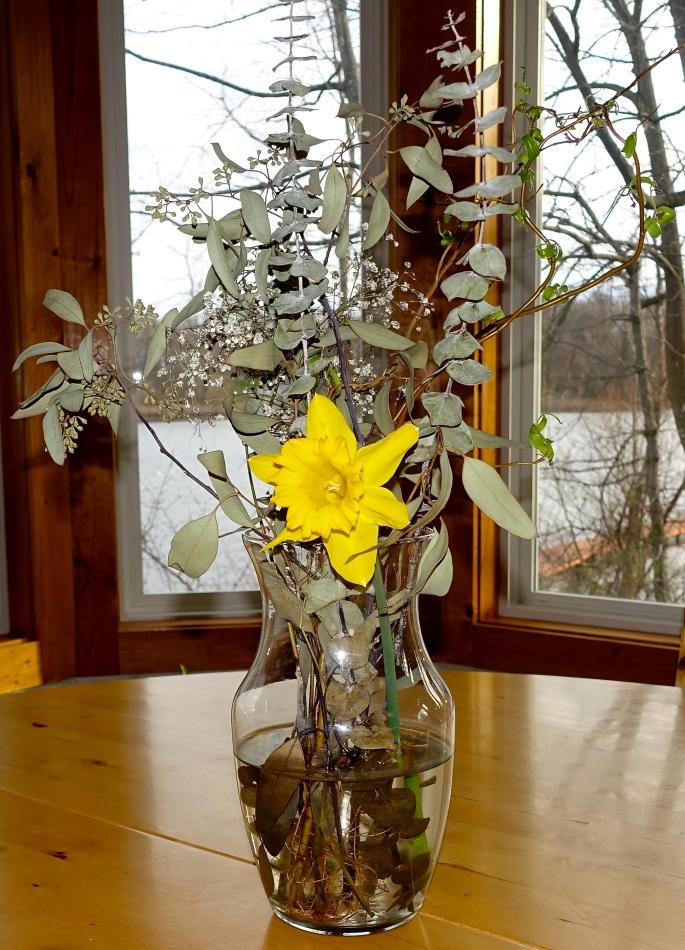 Daffodil in vase