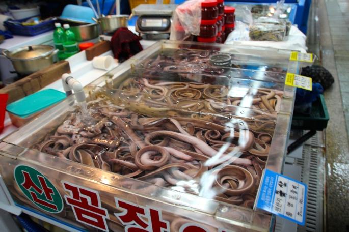 Jagalchi Fish Market 3