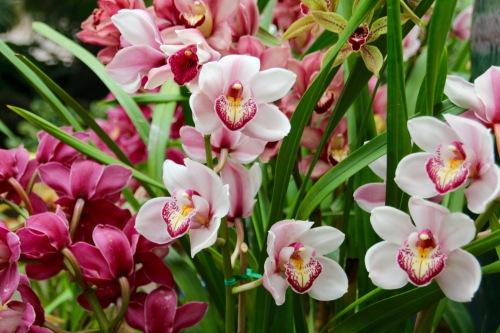 Lush orchids. Balboa Park Botanic Building