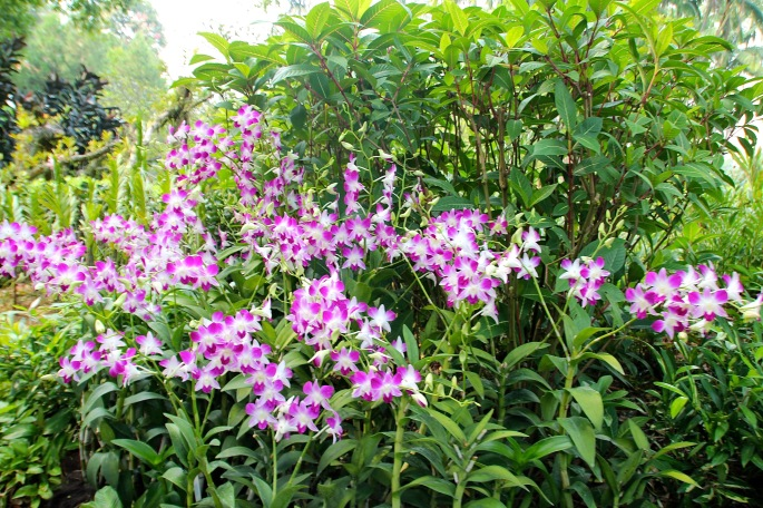 National Orchid Garden 10