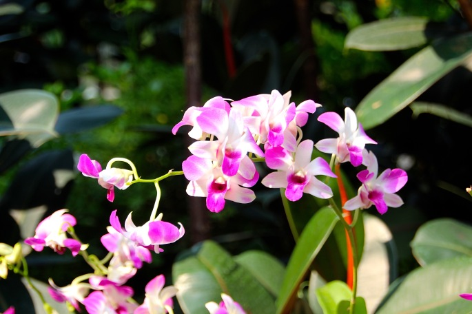 National Orchid Garden 11