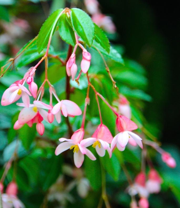 National Orchid Garden 8