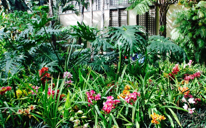 Orchids in Balboa Park's Botanic Building