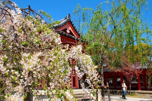 Sanjusangendo Temple 5