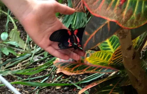 Two Butterflies in a Hand