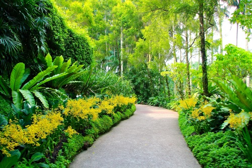 Yellow orchid-lined path. National Orchid Garden