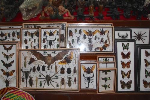 Chao Phraya River insect collections