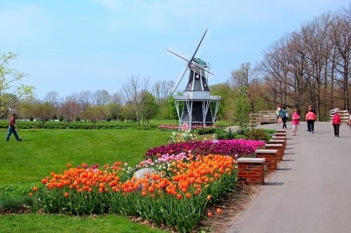 Holland Tulip Time 1