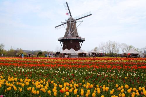 Holland Tulip Time Festival Windmill Island