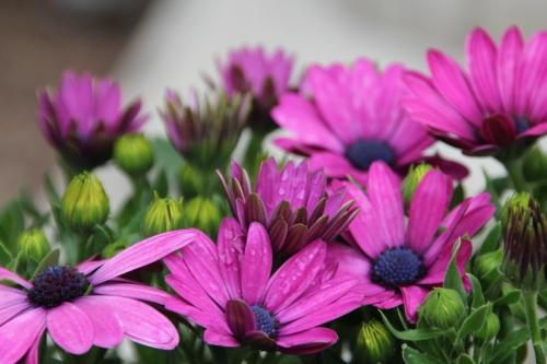 Shanghai flowers