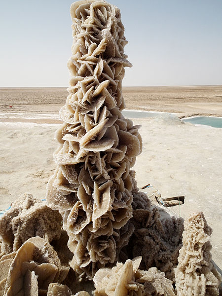 Desert Rose by Laura Pena from Wiki