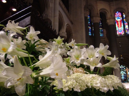 Easter lilies in Cathedral