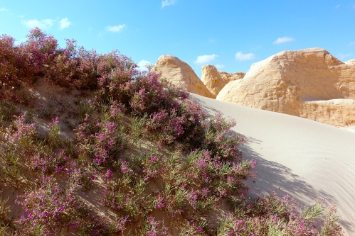 Flowers blooming in Saraha