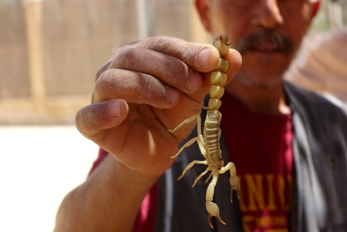 Man holding scorpion in Tunisia