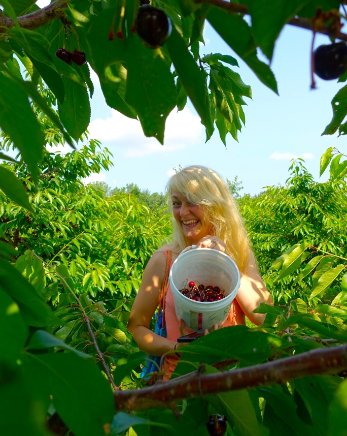 Picking Cherries at Robinette's Orchard, GR, MI. 3
