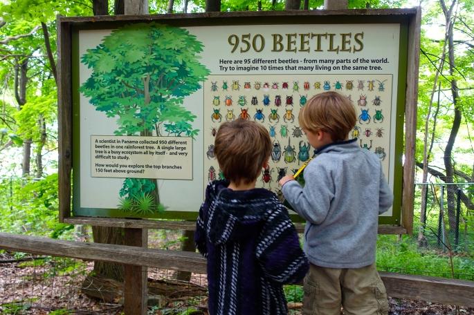 Beetle Chart