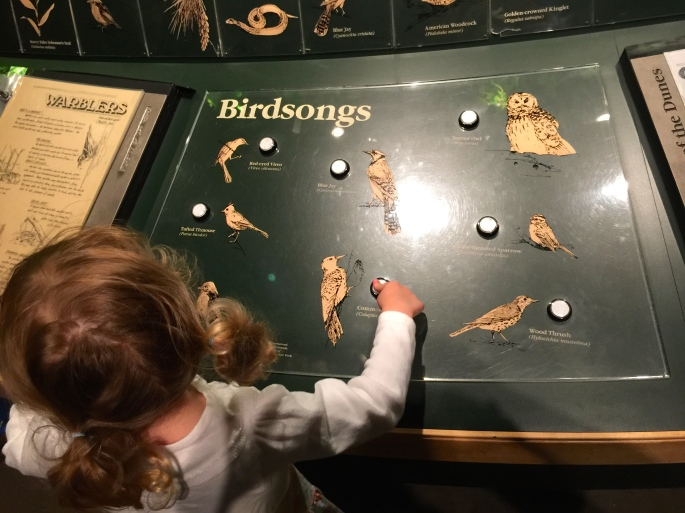 Bird calls at the Grand Rapids Public Museum