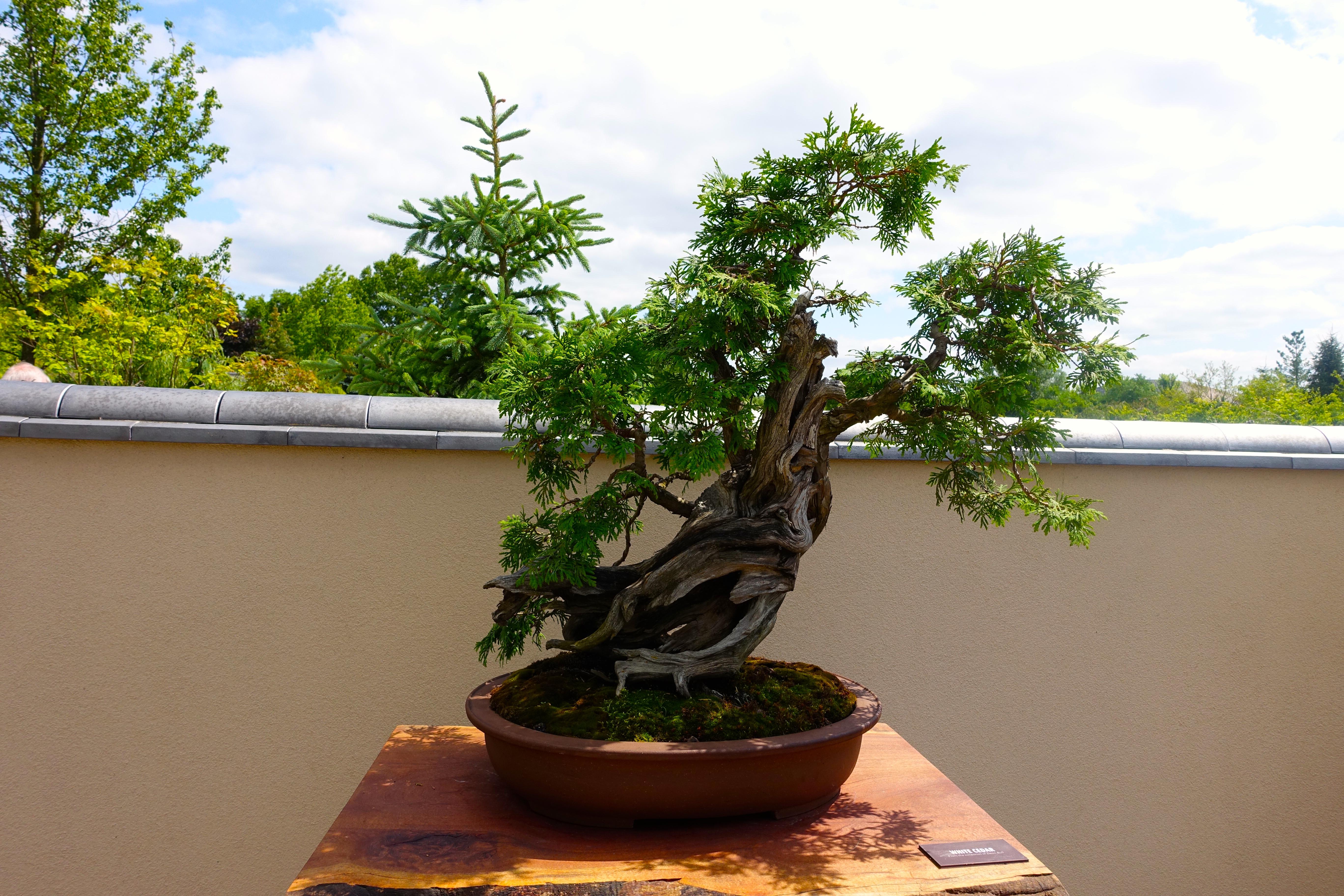 Bonsai at Frederik Meijer Japanese Garden