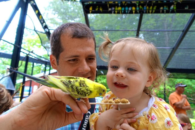 Budgie Feeding with Daddy at John Ball Zoo