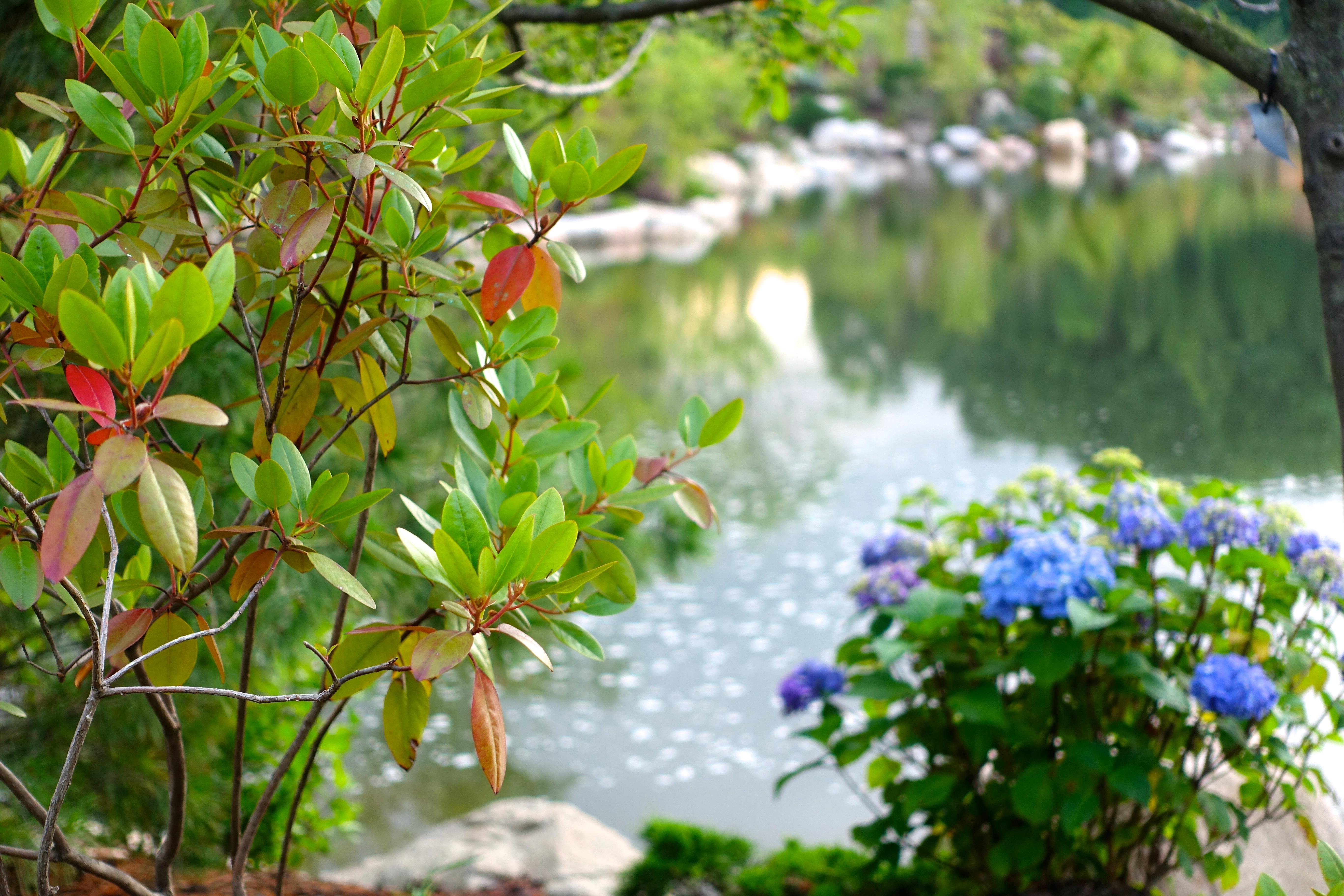 Frederik Meijer Japanese Garden 3