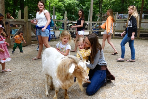 Goats. Petting at John Ball Zoo