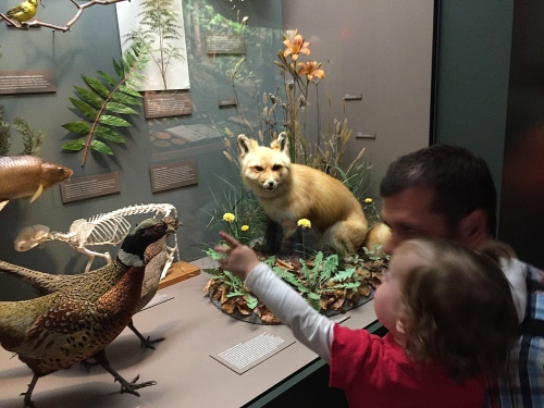 Natural History Exhibits at Grand Rapids Public Museum 3