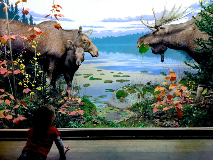Natural History Exhibits at Grand Rapids Public Museum 6