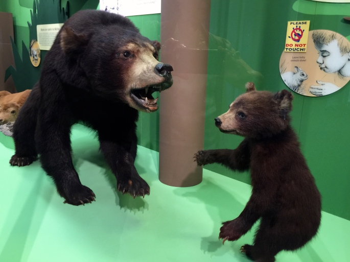 Natural History Exhibits at Grand Rapids Public Museum Bears