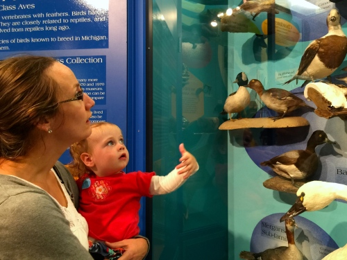 Natural History Exhibits at Grand Rapids Public Museum