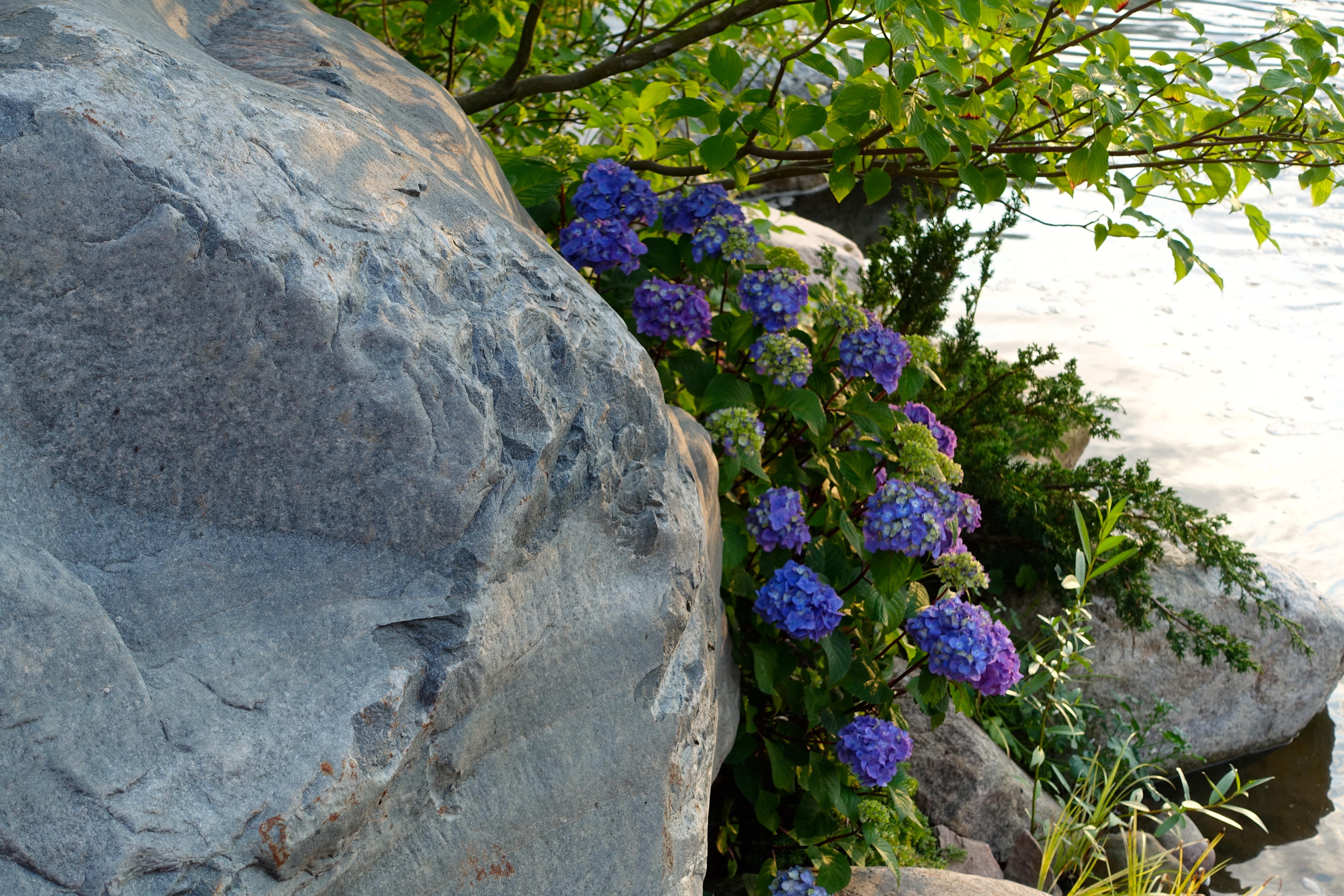 Rocks. Flowers. Water. Japanese Tea Garden Meijer