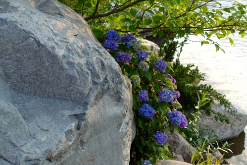 Rocks. Flowers. Water. Japanese Tea Garden Meijer