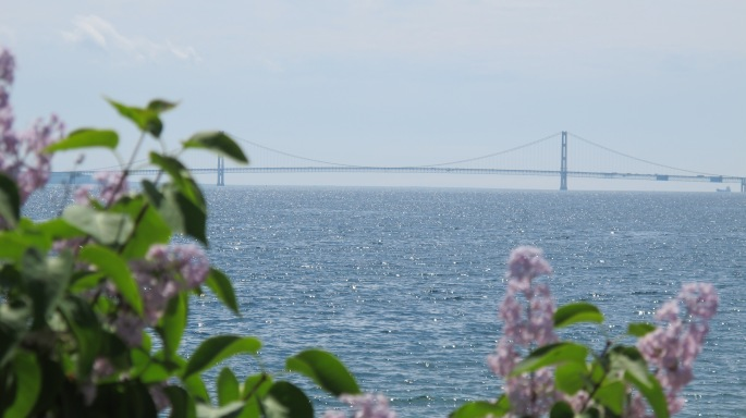 Big Mac Bridge with lilacs in foreground