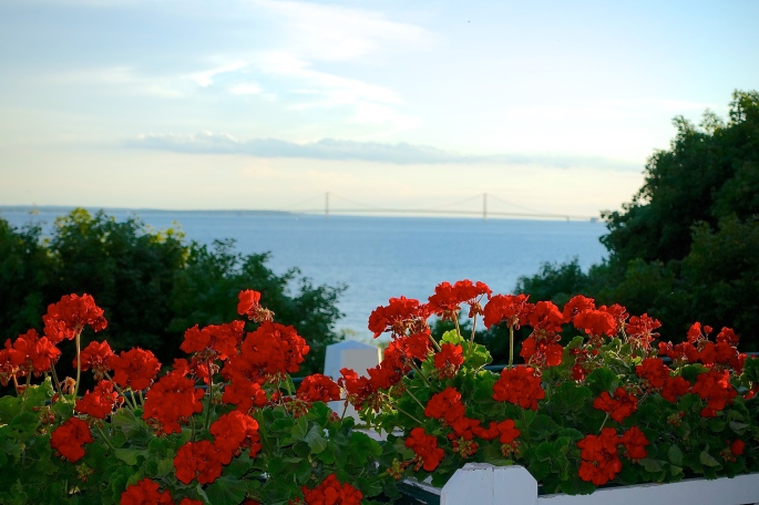Gernaniums in foreground of Mackinac Bridge