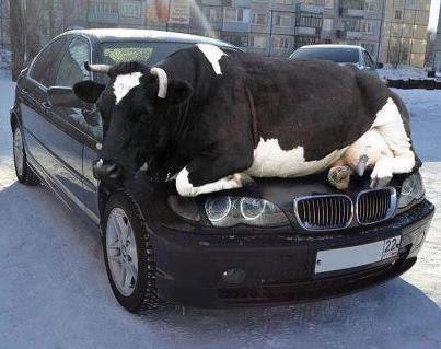 Steer on a Car