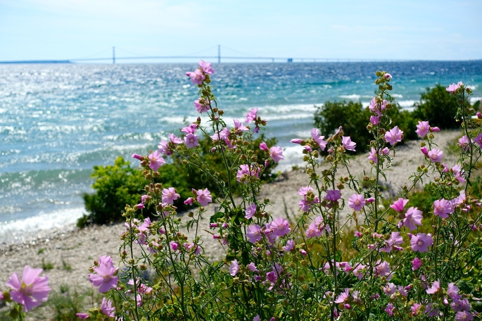 Wildflowers on Mackinac Island