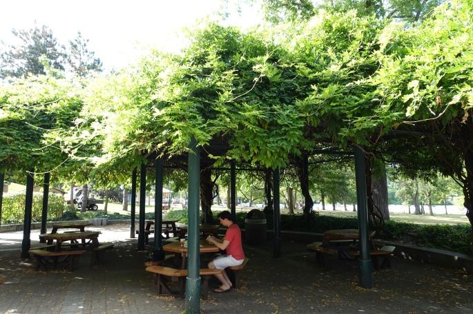 Wisteria Arbor at Niagara Falls State Park