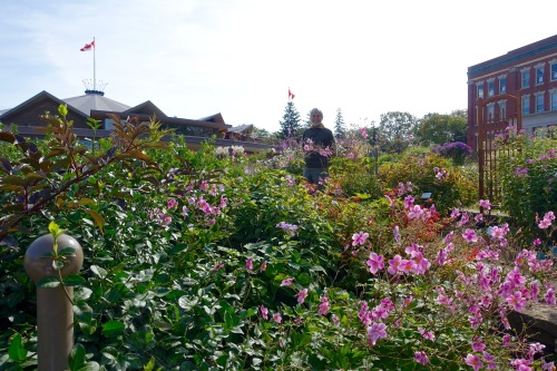 Alan in Garden by Normal School