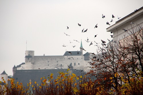 Birds flocking in Salzburg