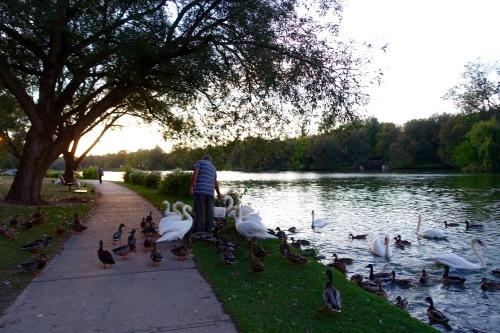 Feeding waterfowl along Avon River