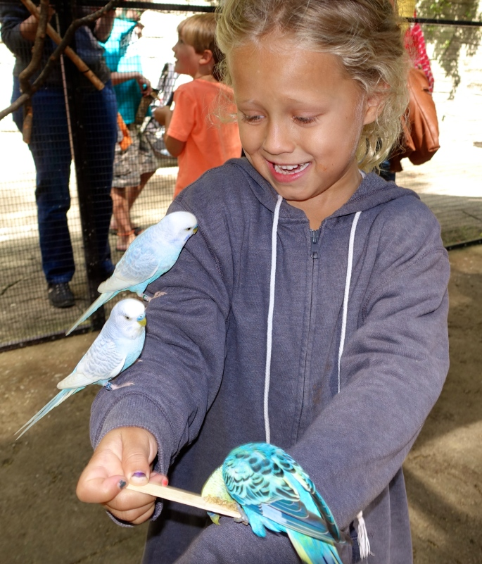 Girl with blue budgie