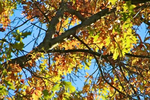 Glory of Autumn copy