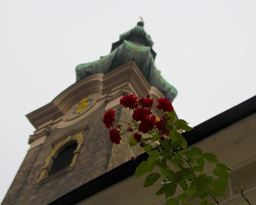 Roses at St. Peter's Abbey