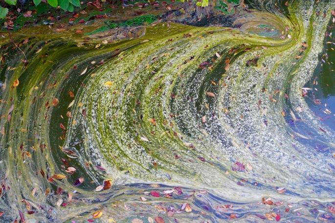 Swirls in Avon River