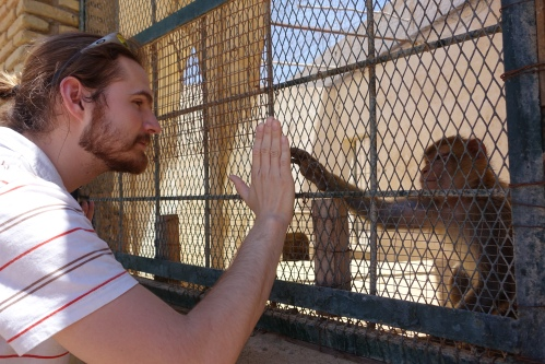 at a Tunisian Zoo 3