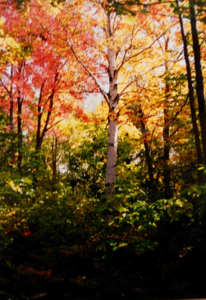 Autumn Leaves in the U.P.