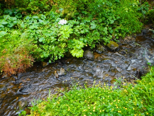 Flower-lined brook at Munising Falls