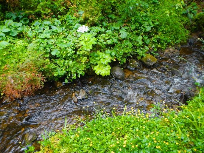 Flower-lined brook at Munising Falls