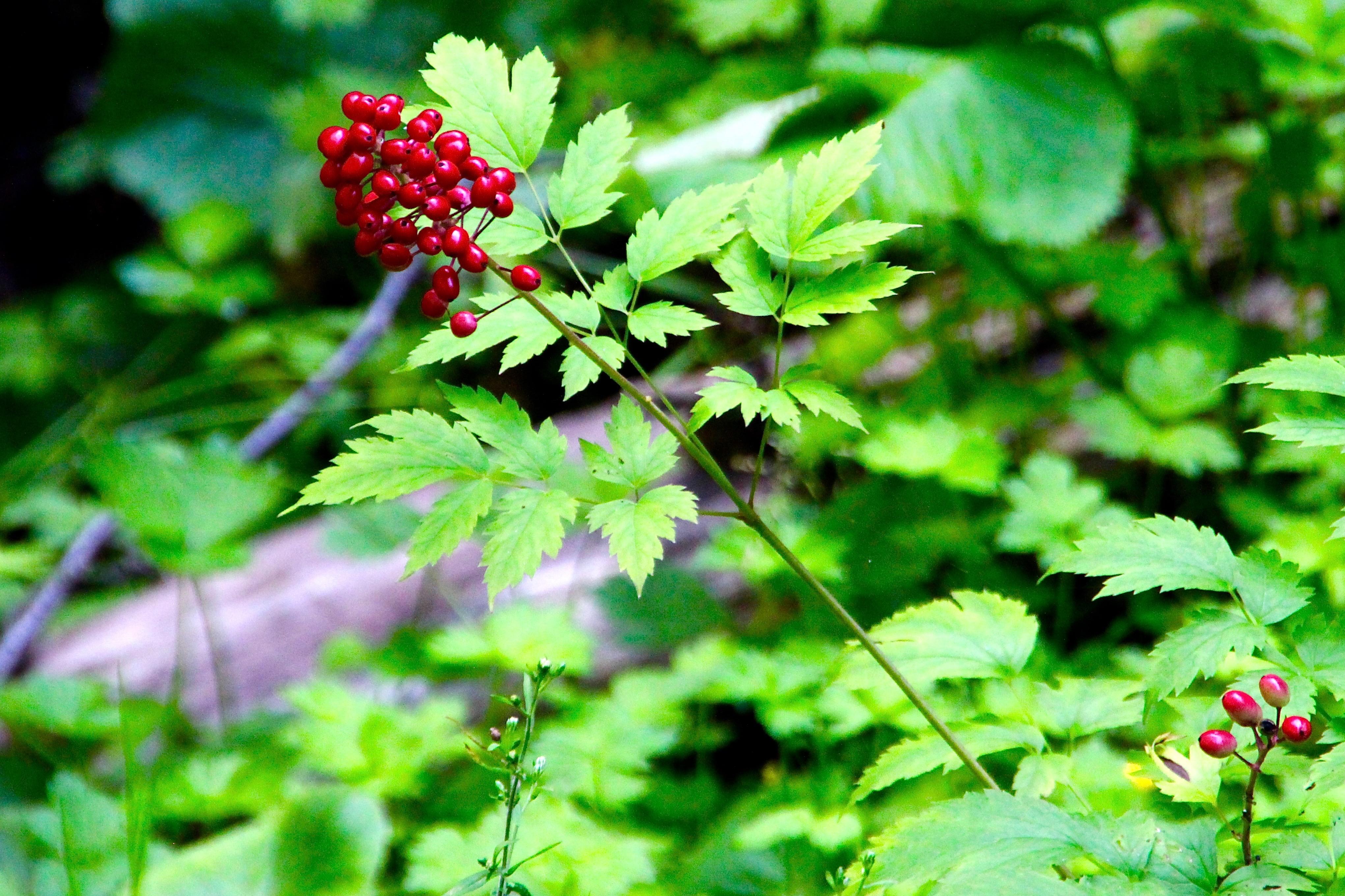 Fruit at Munising Falls